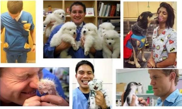 фото ветеринаров